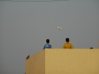 Palestinian youth flying pigeons in Baddawi camp. (c) Fiddian-Qasmiyeh