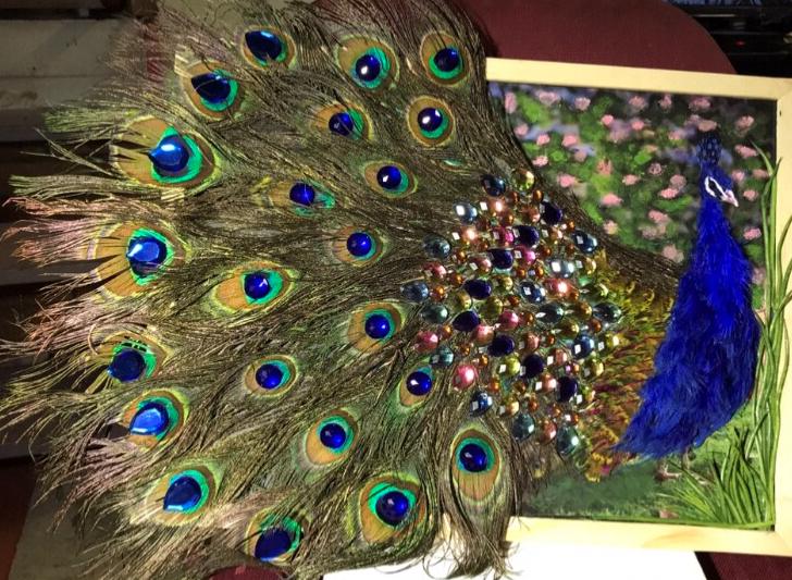 Nedhals Peacock